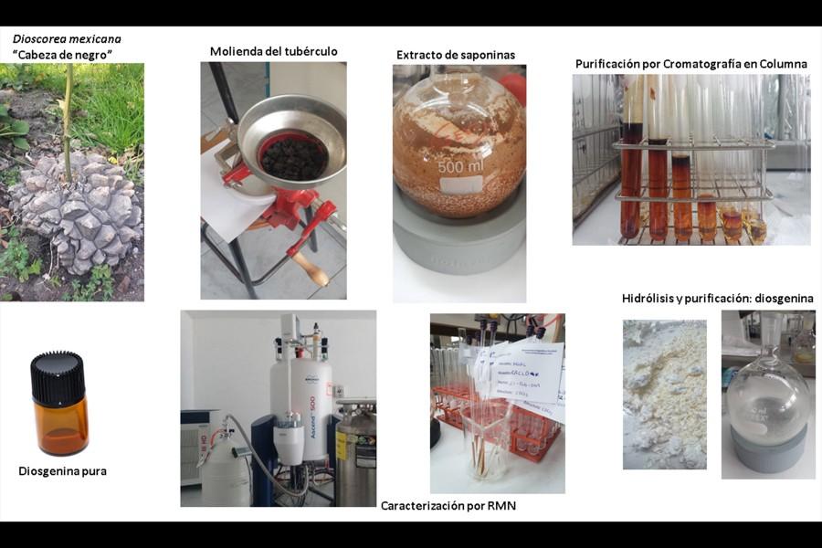 moléculas esteroidales