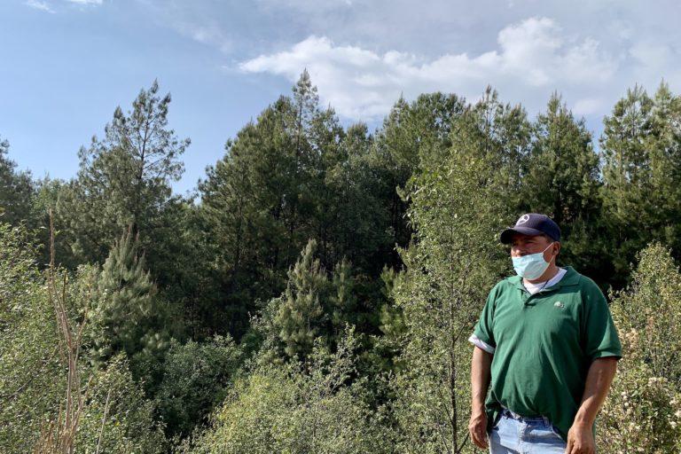México: «Aquí va aumentando la deforestación. Si esto sigue así, la mariposa monarca ya no va a llegar, va a buscar otros sitios»